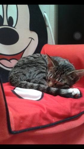Jamie s Cat